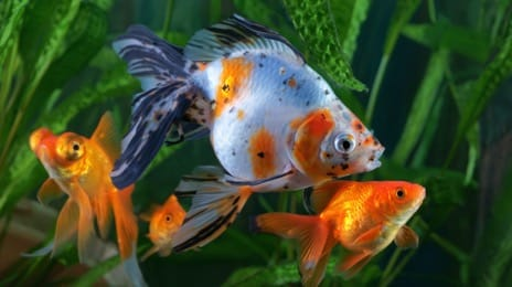 Fish and aquatic pet supplies